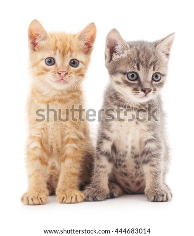 Gray and red cat isolated on a white background.
