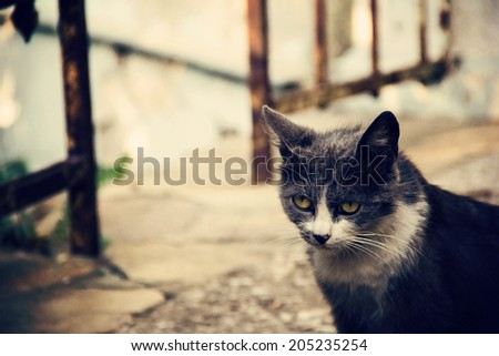 gray and white  cat in the street - stock photo