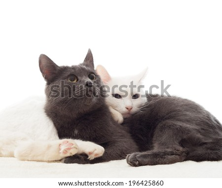 gray and white cats