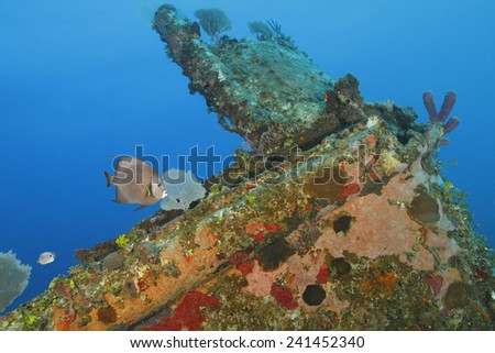Gray Angelfish and Foureye Butterflyfish swimming over a coral encrusted shipwreck - Roatan, Honduras  - stock photo