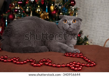gray British cat Christmas decorations