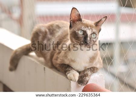 Gray cat - stock photo