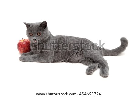 gray cat and red apple isolated on a white background. Horizontal photo. - stock photo