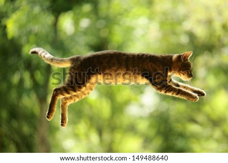 gray cat hunts in the garden. - stock photo