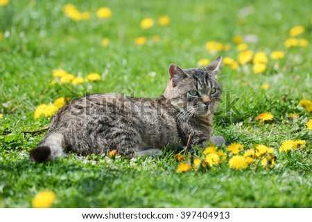 Gray cat in dandelions