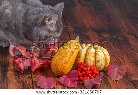 Gray cat inspecting Halloween decorations