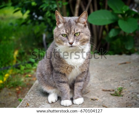 gray cat is sitting on the bottom step of the porch of the country house