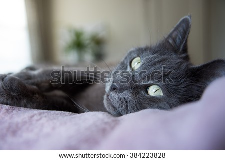 Gray Cat Laying on Bed Next to Window