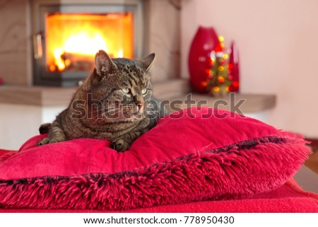 Gray Cat lies on red pillows near fireplace with flame.