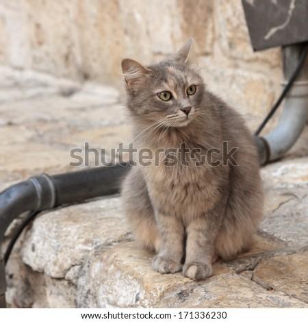 Gray cat looking away on the street in Jerusalem, Israel - stock photo