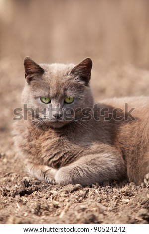 Gray cat lying on earth