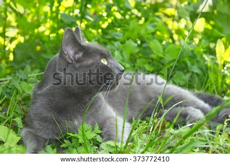 Gray cat lying on the green grass in summer time, sun beams lights through the dense tree branches - stock photo
