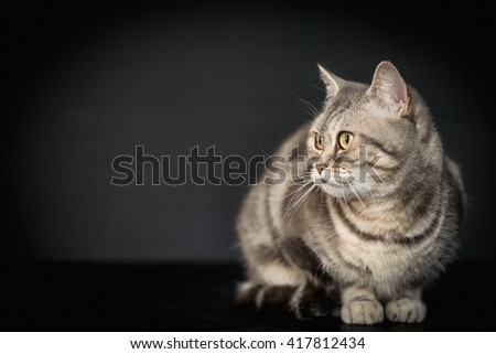 Gray cat on black background - stock photo