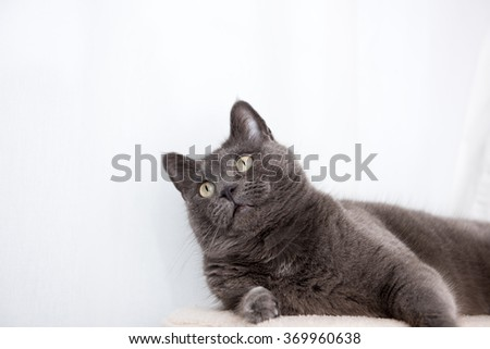 Gray Cat on top of Tree