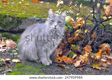 gray cat on yellow leaves - stock photo