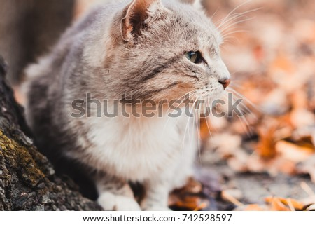 Gray cat sitting outdoors on leaves in autumn