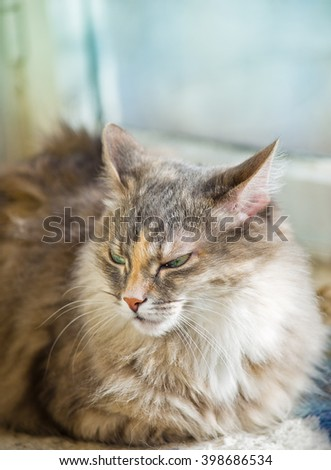 Gray cat sittingon a sunny day time on a balcony, happy cat, domestic cat
