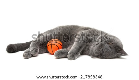 gray cat with a ball on a white background. horizontal photo. - stock photo