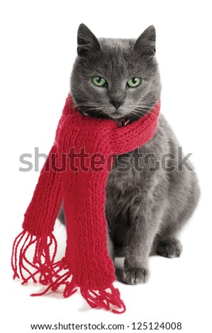 gray cat with a red Scarf - stock photo