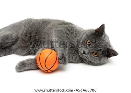 gray cat with an orange ball on a white background. horizontal photo. - stock photo