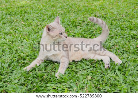 Gray cat with big green eyes in the thick foliage green grass.