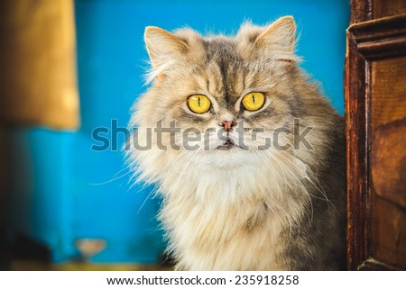 Gray cat with big round green eyes looking in camera - stock photo