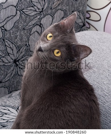 Gray cat with yellow eyes sitting on colorful background - stock photo