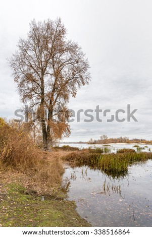 Gray end of autumn close to the Dnieper river with Typha latifolia reeds in the water. Trees and cloudy sky in the background