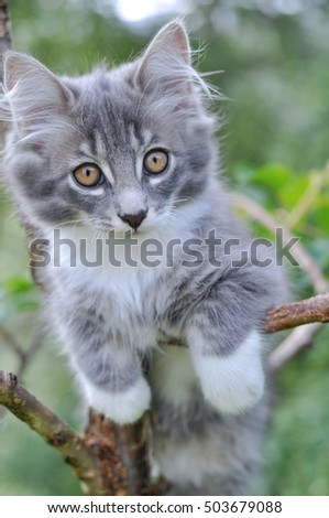 gray fluffy kitten in a tree