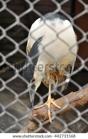 Gray heron standing on tree - stock photo