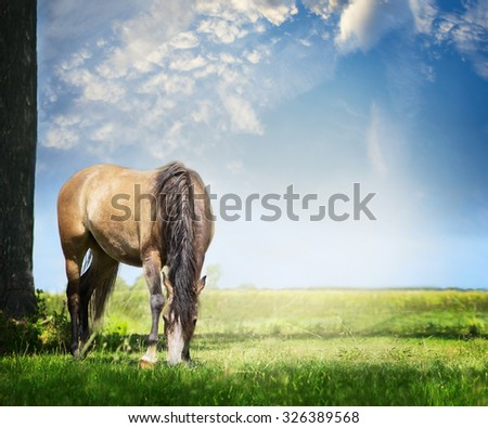 Gray horse grazes on summer or spring pasture against  backdrop of beautiful blue sky with clouds - stock photo