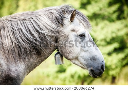 Gray horse in Carpathian mountains.