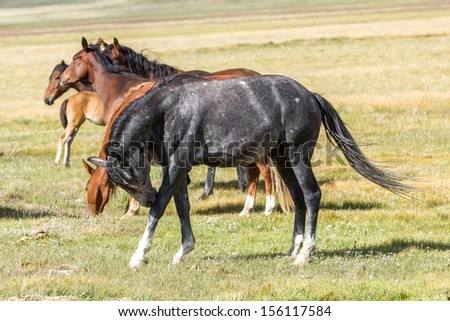 Gray horse on the grass - stock photo