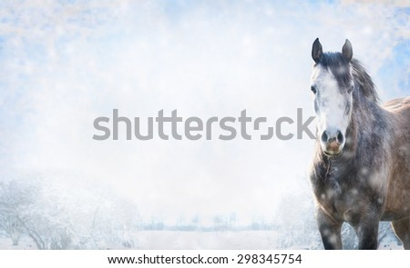 Gray horse on winter landscape with snow, banner for website. - stock photo