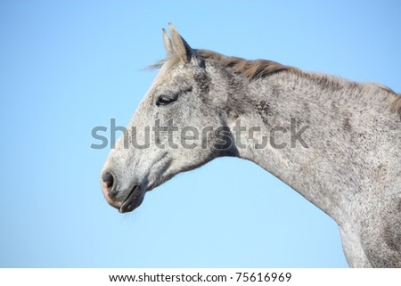 Gray horse portrait on sky background