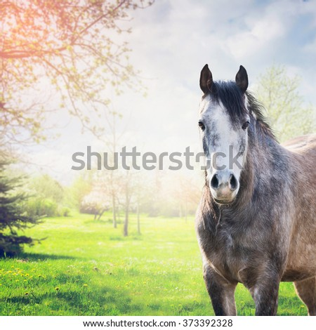 Gray horse stand looking at camera over spring nature background with green grass and tree blossom - stock photo