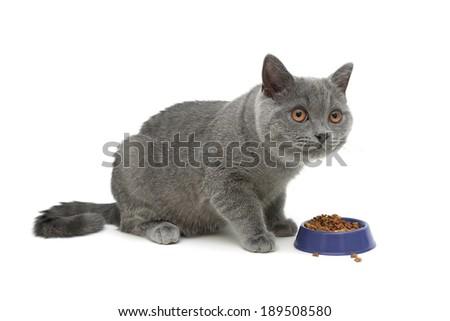 gray kitten eats cat food isolated on white background. horizontal photo. - stock photo