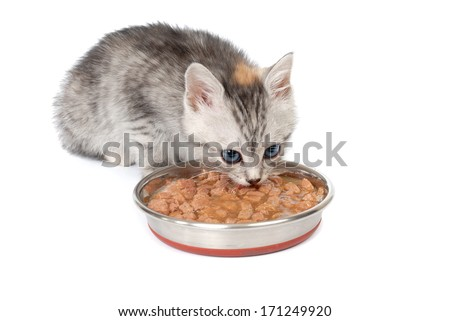 Gray kitten eats from a bowl. Isolated on white background - stock photo