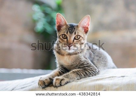Gray kitten isolated