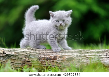 Gray kitten on a tree in the green grass - stock photo