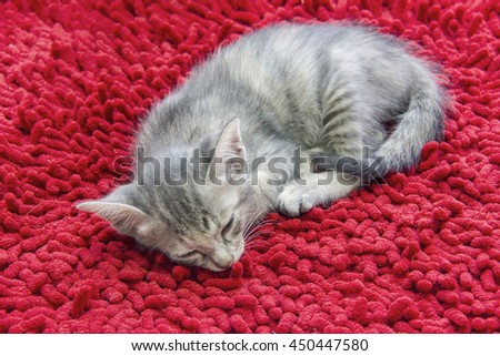 Gray kitten sleeping on red carpet  - stock photo
