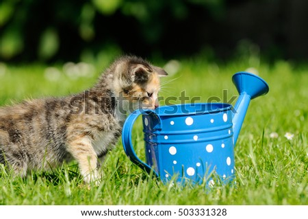 gray kitten standing on meadow and looking in the can