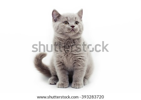 gray kitten white background - stock photo
