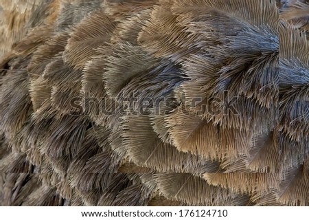 Gray ostrich plumage photographed close up