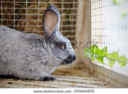 Gray rabbit in a cage and a leaf of a dandelion. - stock photo