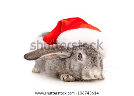 Gray rabbit in a Santas hat, isolated on white