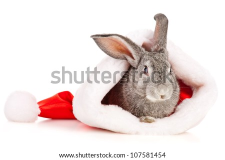 Gray rabbit in a Santas hat, isolated on white - stock photo