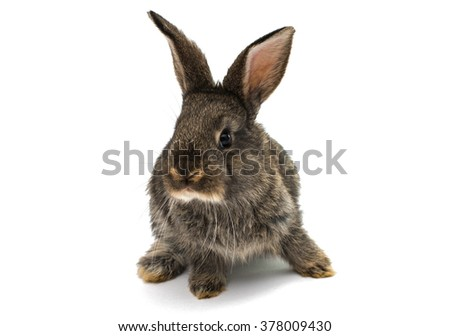 gray rabbit on a white background - stock photo