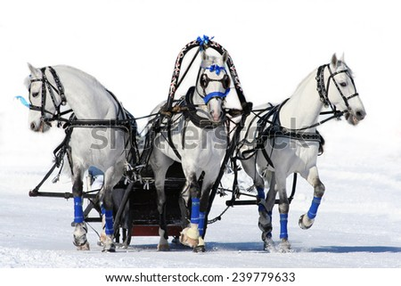 Gray russian troika. white horses. isolated
