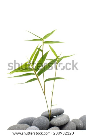 Gray stones with bamboo leaf - stock photo